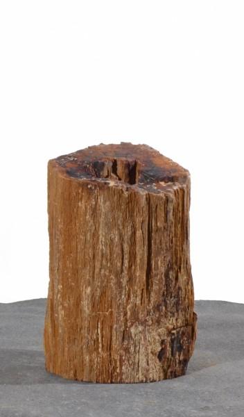Versteinertes Holz HZ15128