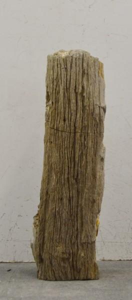 Versteinertes Holz HZ16694