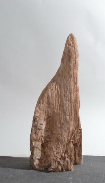 Versteinertes Holz HZ15854