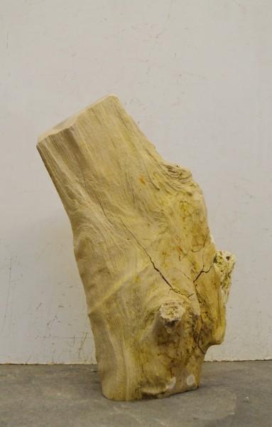 Versteinertes Holz HZ16696